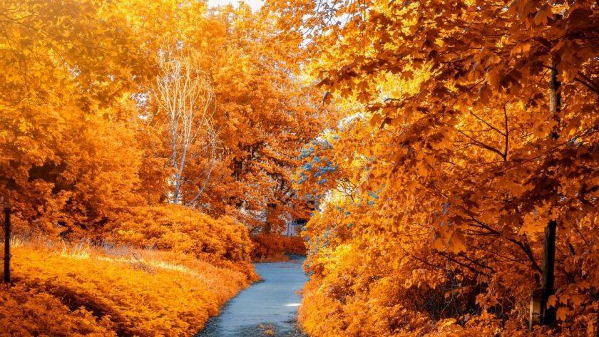 To do list d'automne pour savoir quoi faire en automne